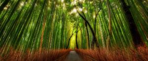 日本京都竹林风景壁纸