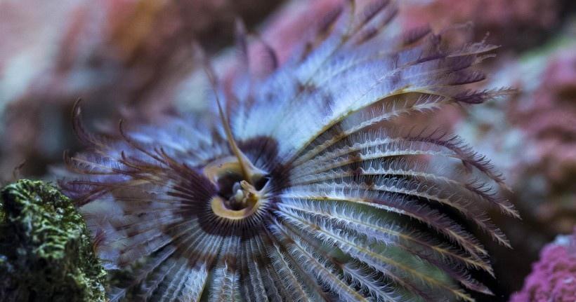 海底世界海洋生物