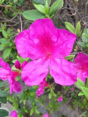 清明节花朵背景图片