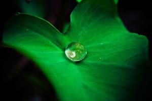 绿色叶子上的水珠