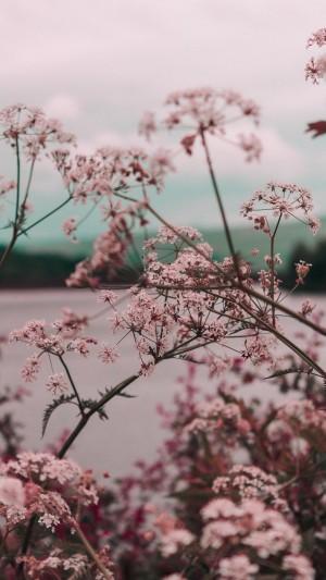 清新花朵文艺写真