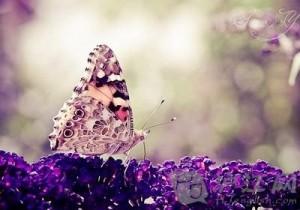 多彩清新蝴蝶手机壁纸