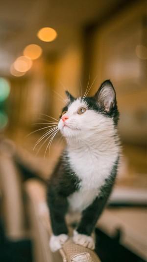 回眸眺望的小猫咪