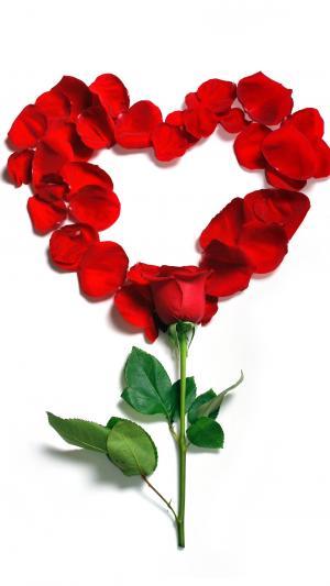 情人节的创意玫瑰花图片