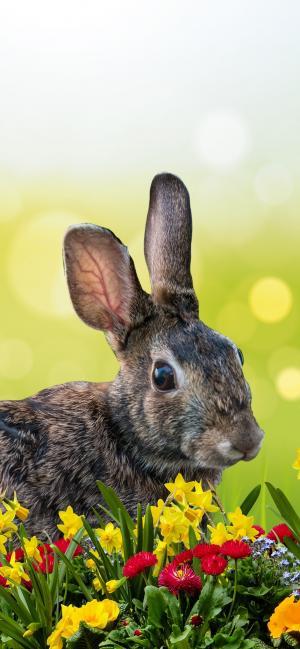复活节时的兔子