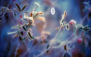 二十四节气之霜降时节唯美树叶结霜高清桌面壁纸