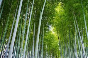 竹林 竹子 竹叶高清壁纸