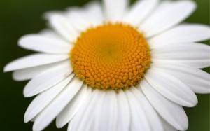 清新花卉高清攝影寫真