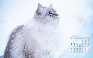 2020年5月雪地里的猫咪高清日历壁纸