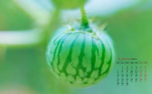 2020年9月奇妙的微距植物摄影高清日历壁纸