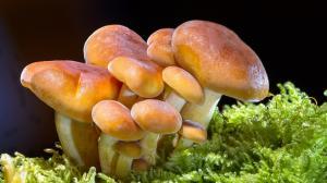 春天蘑菇高清图片,做一个采蘑菇的小姑娘!