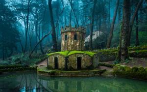 葡萄牙 树木 苔藓 城堡 池塘 风景图片