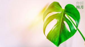 你好四月明亮绿色护眼植物