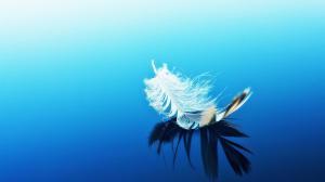 飘落的羽毛图片唯美好看高清桌面壁纸