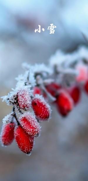 小雪时节之雪花中的枸杞