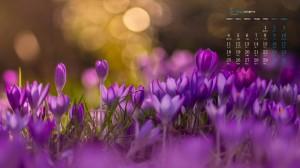 2020年5月清新唯美植物花卉日历壁纸
