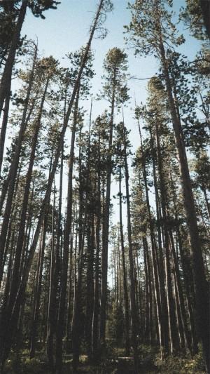 绿色护眼树林美景高清手机壁纸