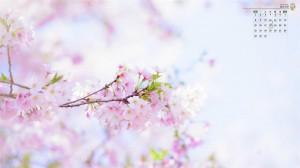 2020年3月樱花绽放写真日历