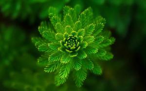 超清新护眼养眼绿色植物桌面壁纸