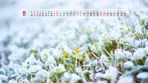 2019年11月唯美植物微距摄影日历壁纸