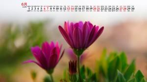 2020年6月清新唯美花朵植物桌面日历壁纸
