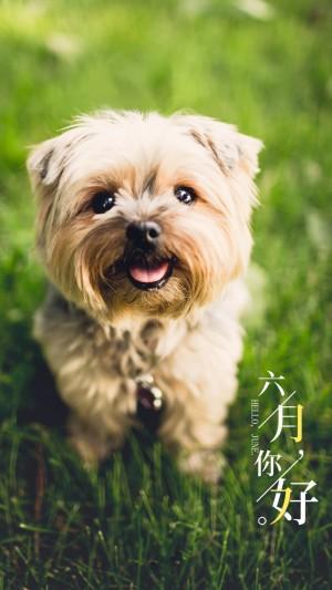 六月阳光下的小萌狗