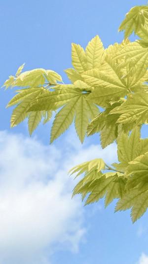 绿色树叶清新养眼写真