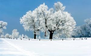 24节气之立冬唯美高清壁纸图片