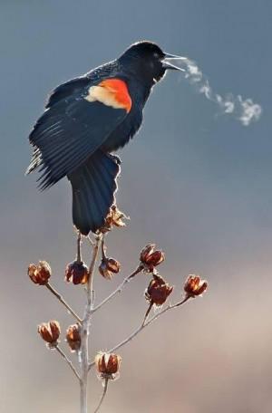 天冷时小鸟吐气成冰