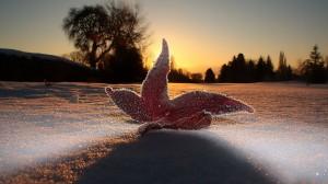 大气冬日雪景高清桌面壁纸