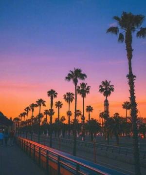 夕阳西下树木影子唯美意境图片