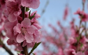 三月百花盛开的季节