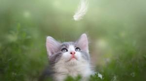 呆萌可爱的猫咪桌面壁纸
