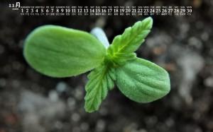 2020年11月绿色养眼植物日历壁纸