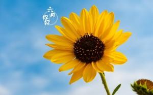 六月的向日葵