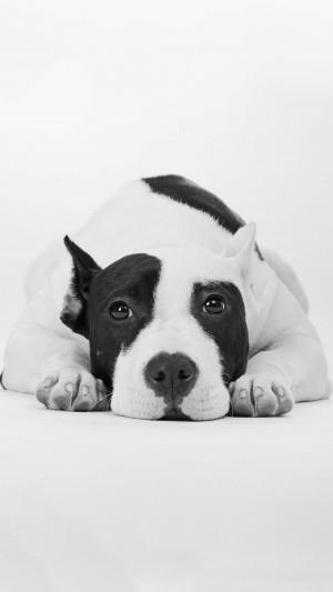 黑白相间的可爱狗狗
