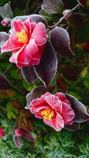霜降之结霜的花朵