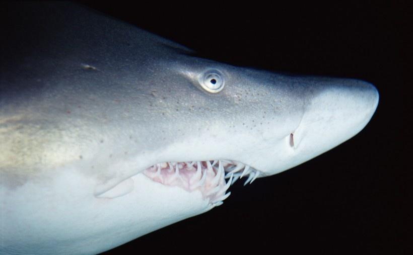 海洋鱼类生物特写图片