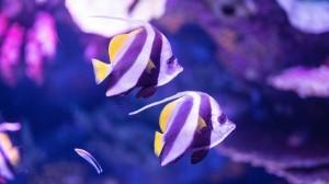 多彩美丽的热带鱼图片大全