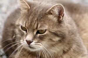 可爱软萌的小猫咪图片