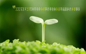 2019年12月清新绿色养眼桌面日历壁纸