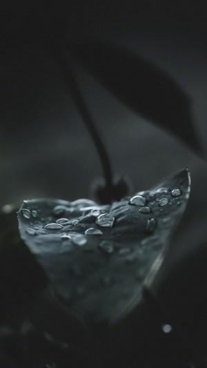 叶子上的水珠微距镜头
