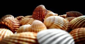 精致漂亮的工艺品海螺贝壳图片
