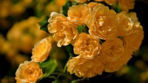 野蔷薇盛开的夏
