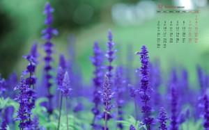 2019年12月清新淡雅紫色薰衣草日历壁纸