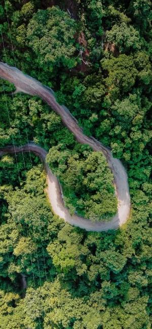 大自然绿色茂密树木摄影手机壁纸