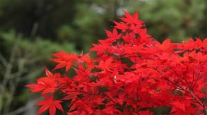 日本六甲山秋景唯美高清桌面壁纸