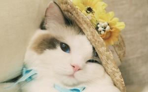 可爱萌宠猫咪图片壁纸