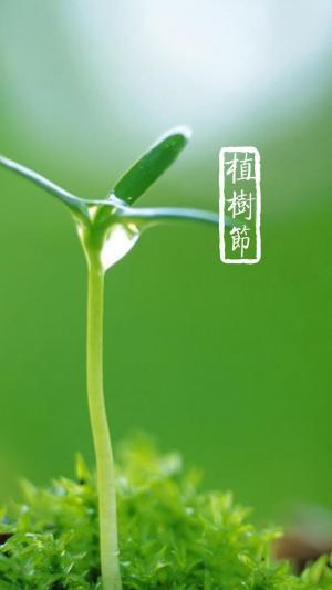 植树节的小嫩芽手机壁纸图片