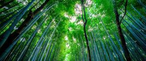 日本竹林风景壁纸